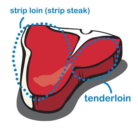 T Bone Anatomy